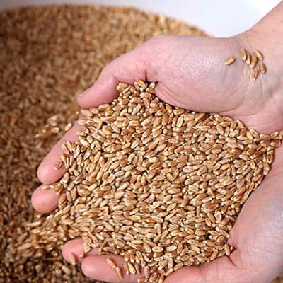 Grain in Hand